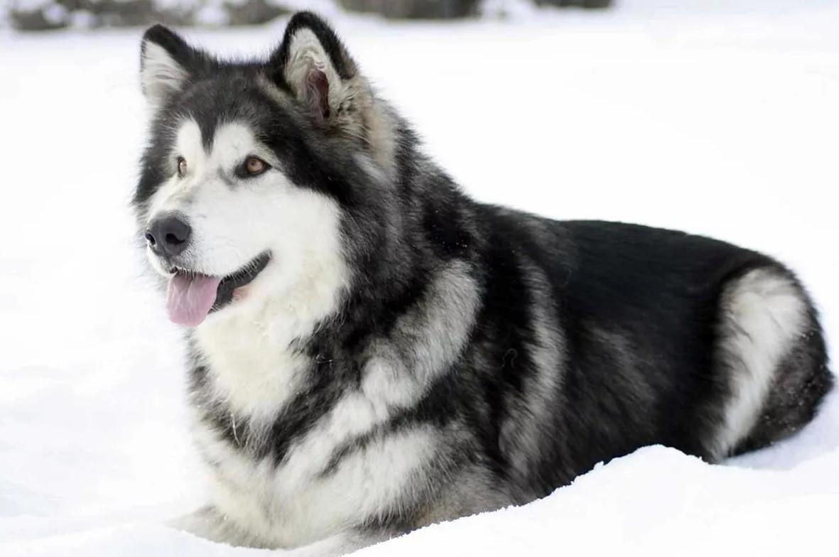 древние породы собак