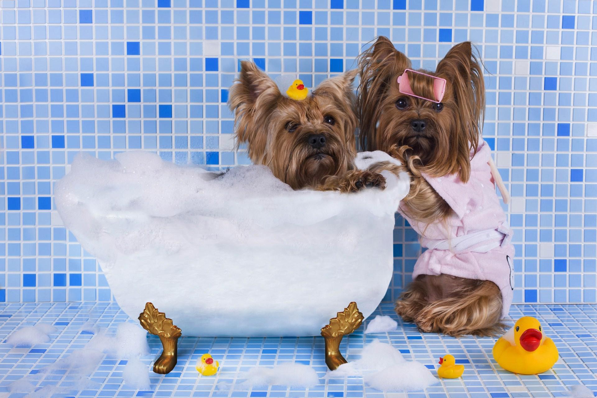 Когда можно купать щенка