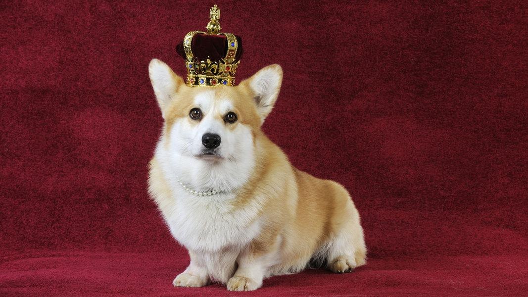 Королевские собаки Елизаветы
