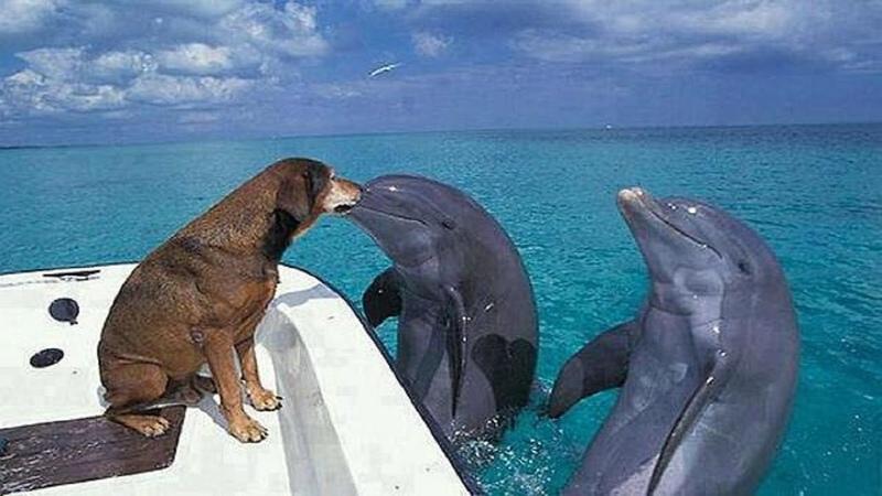 Кто умней собака или дельфин