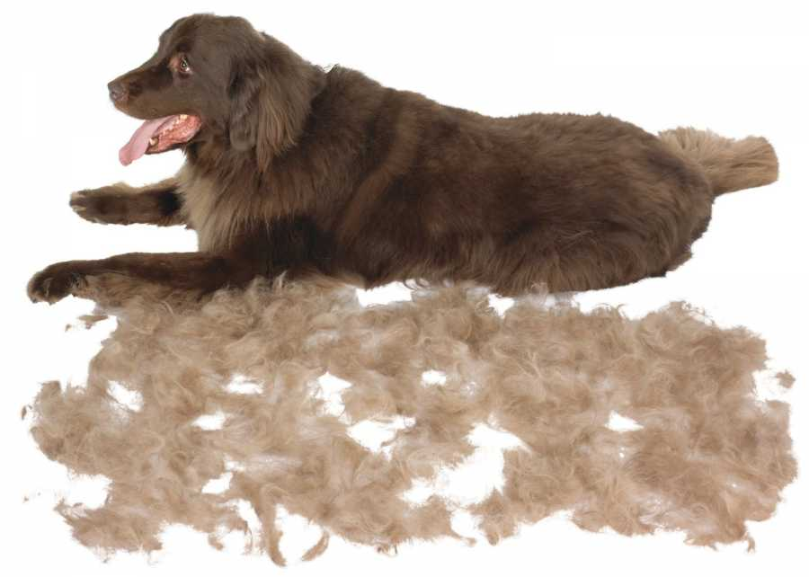 Линька у собак периоды линьки