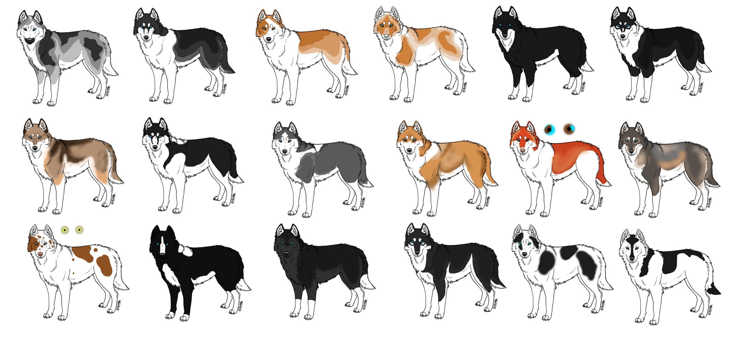 Окрасы собак разновидности