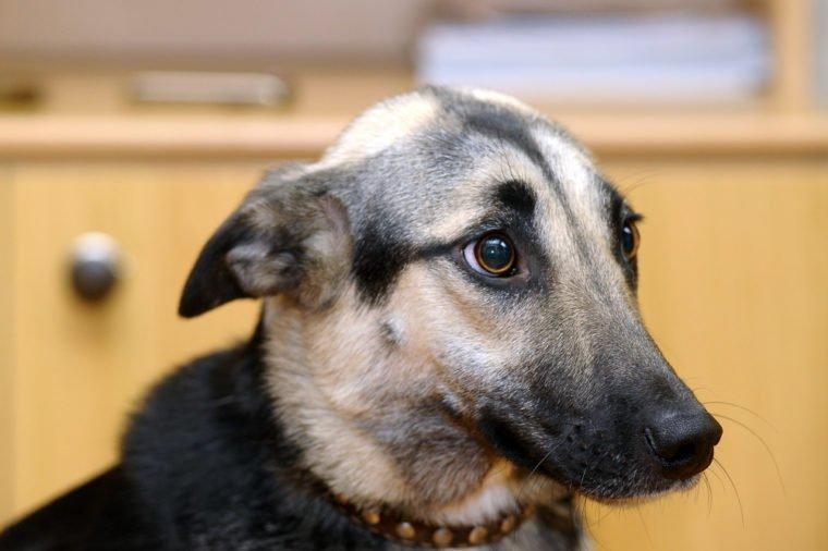 Почему собаки поджимают уши