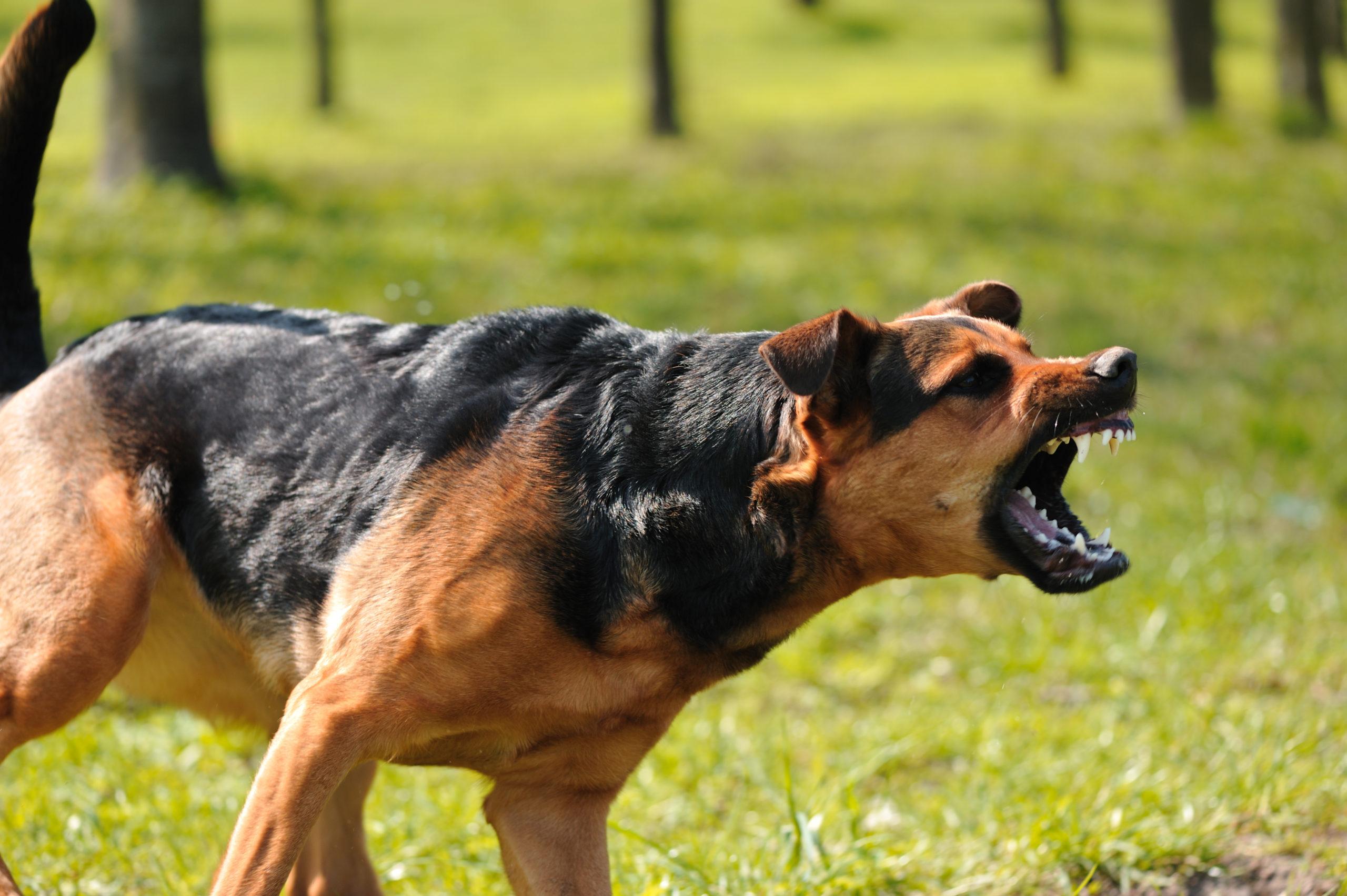 Почему у собаки проявляется агрессия