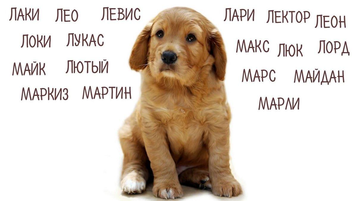 популярные клички собак