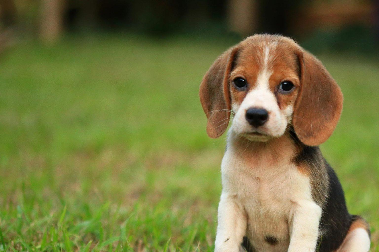 порода собак которая чаще оказываются на улице