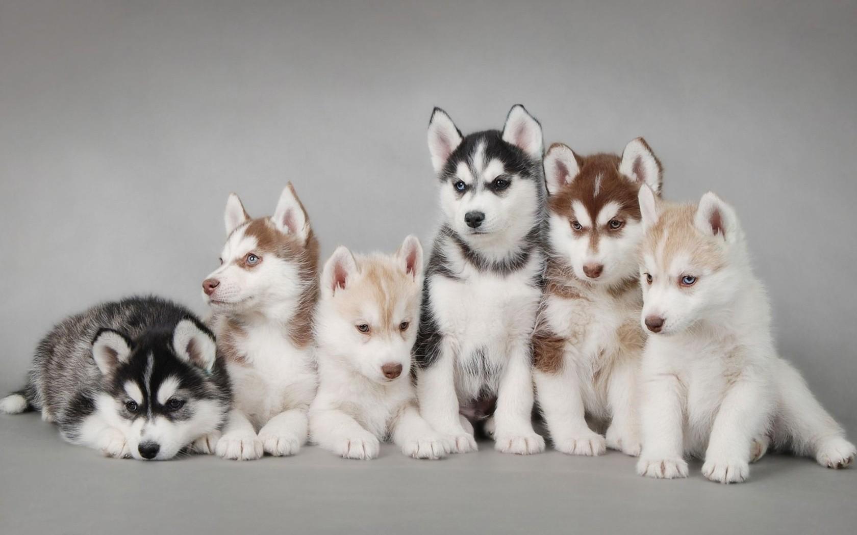 самые красивые щенки