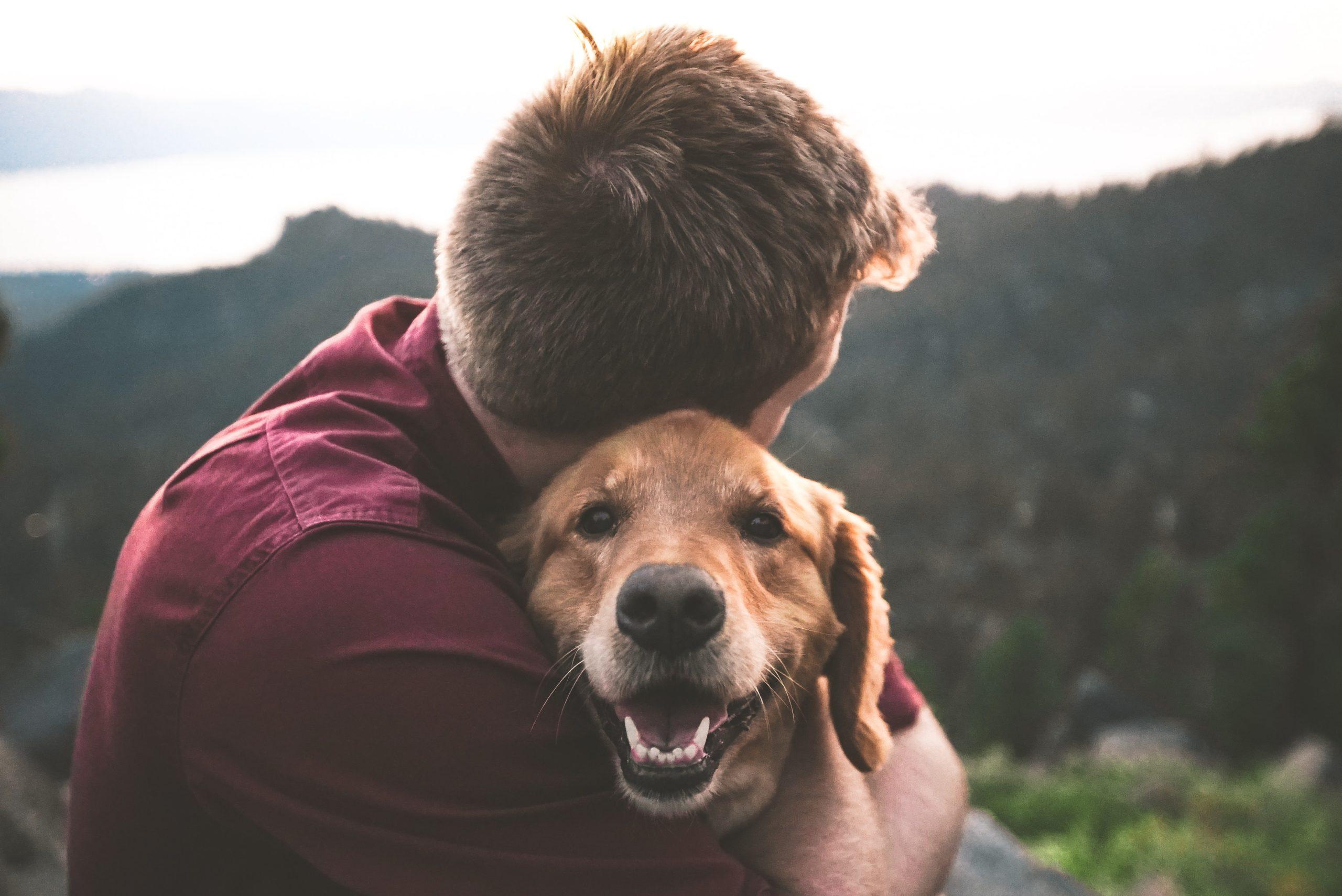 Почему собака лучший друг человека