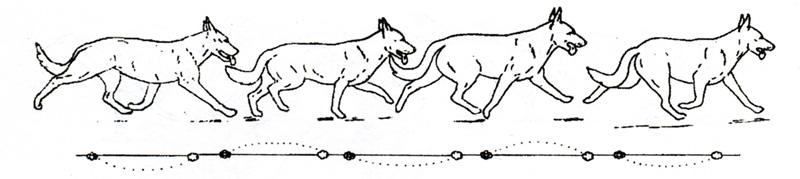 Виды движения собаки