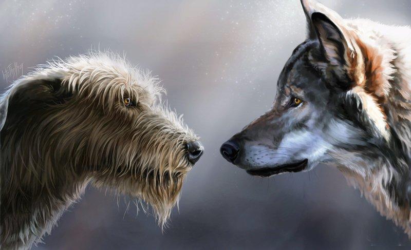 Волки или собаки