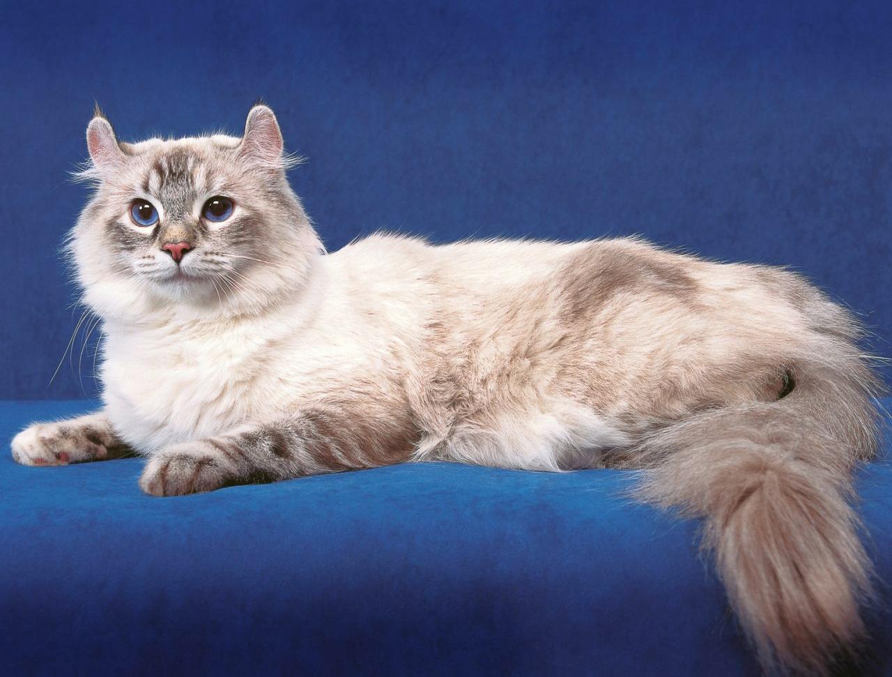 породы кошек с названиями