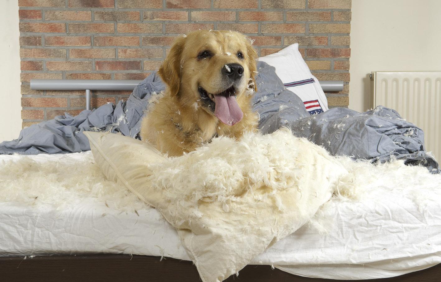 Что делать с непослушной собакой