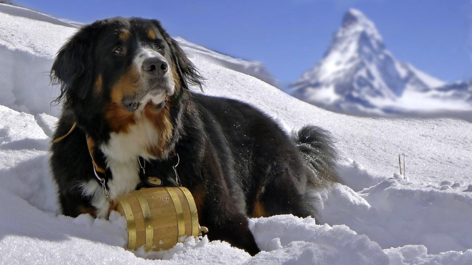 Горные породы собак