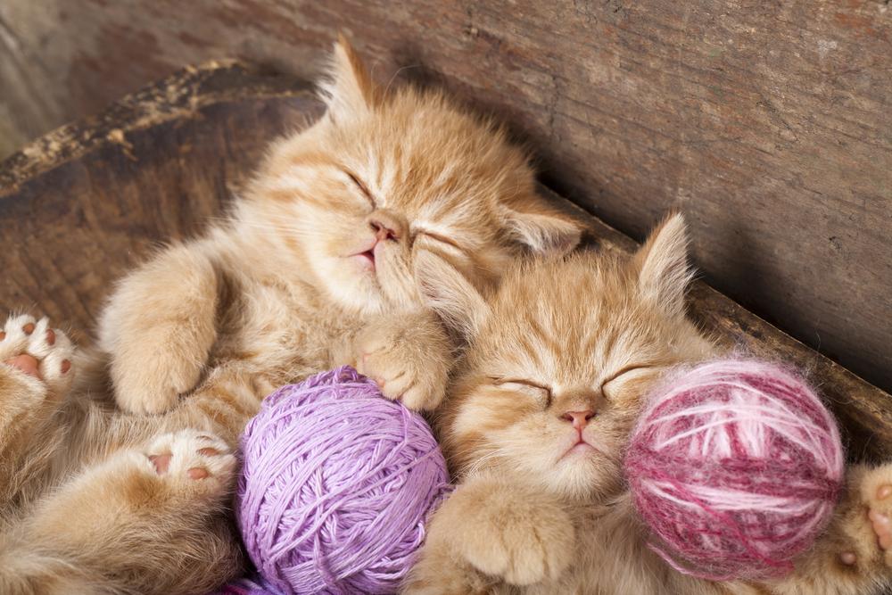 К чему снятся котята толкование в разных сонниках