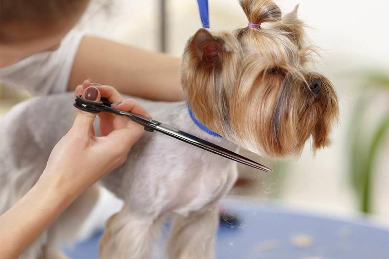 Как подстричь собаку