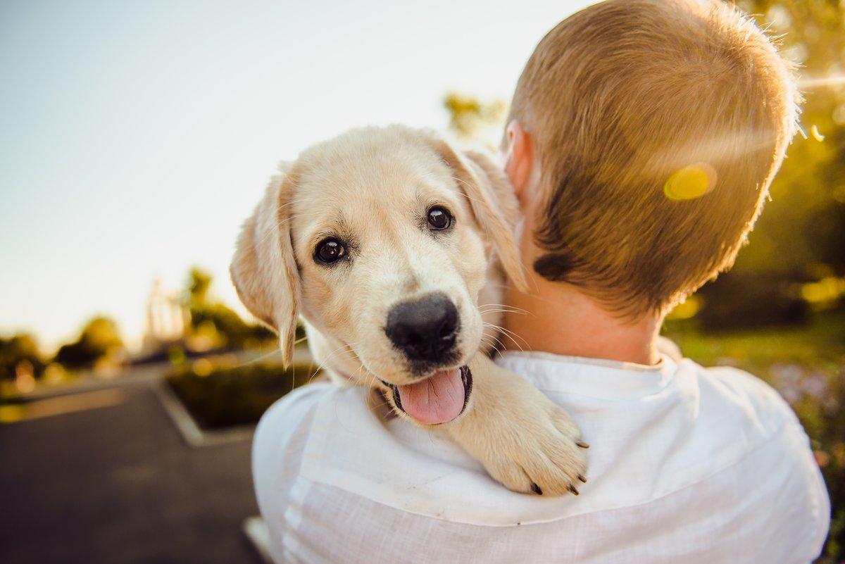 Как выбрать собаку себе по душе
