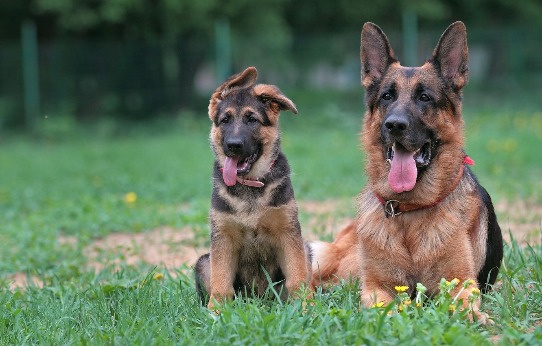 клички для собак немецкой овчарки
