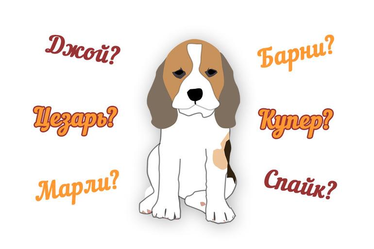 смешные и прикольные клички для собак