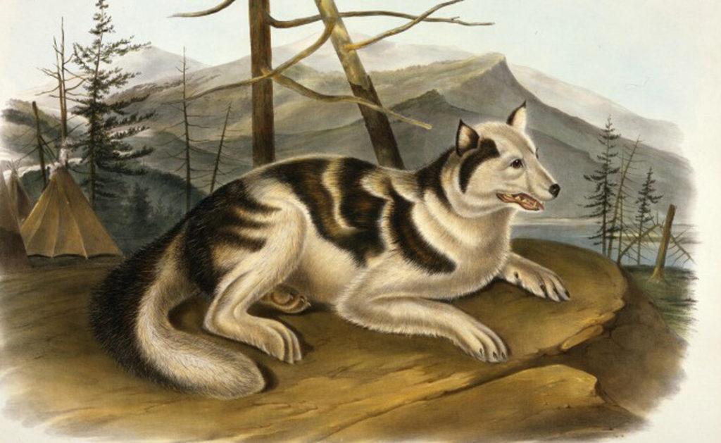 Собаки племени сахту
