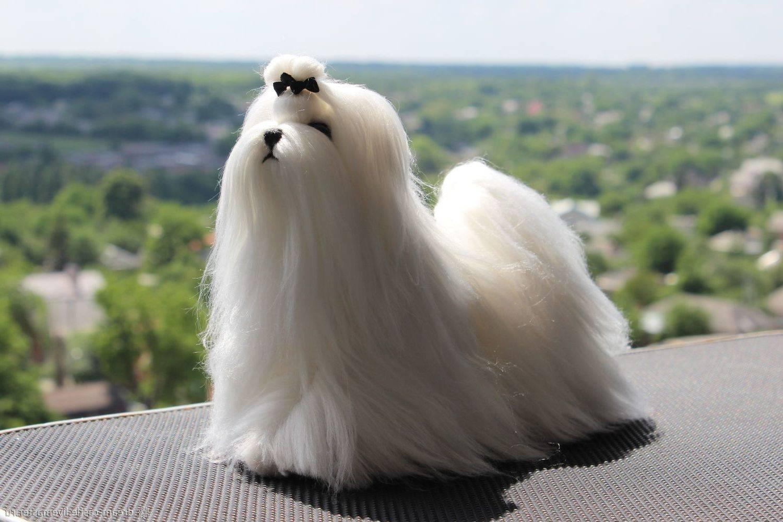 Собаки с белоснежной шерстью