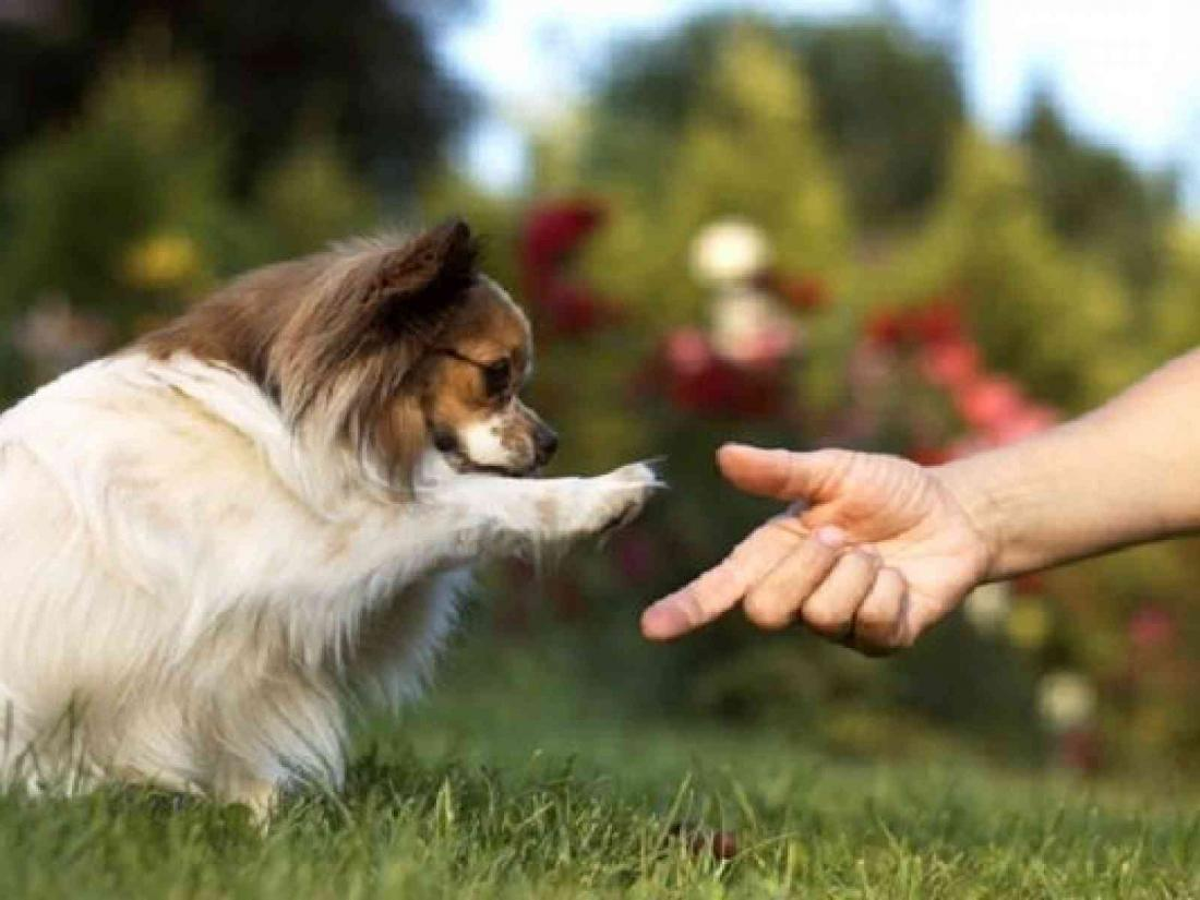 рессировка маленьких собак