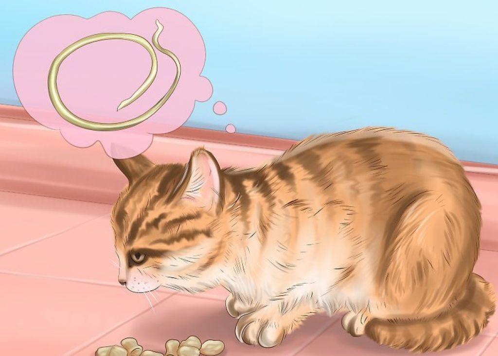 Глисты у котов лечение народными средствами