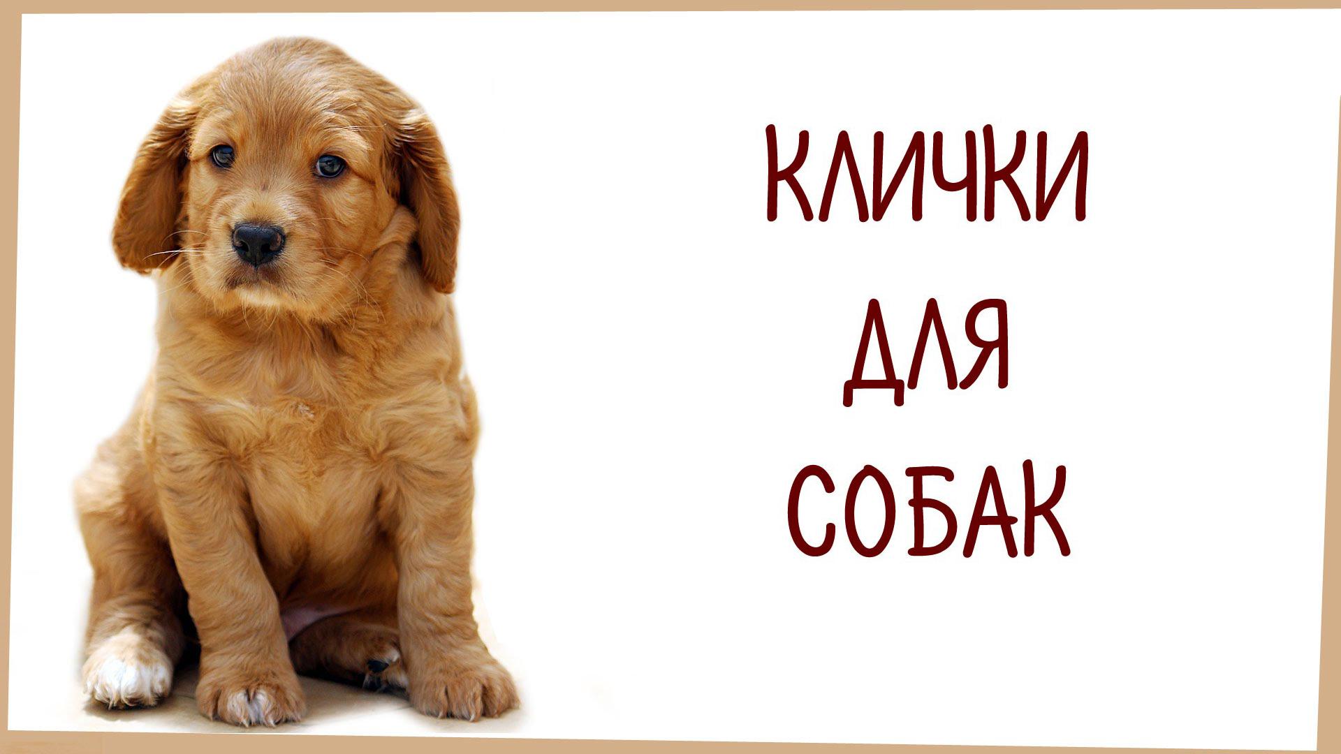 имена для собак мальчиков и девочек