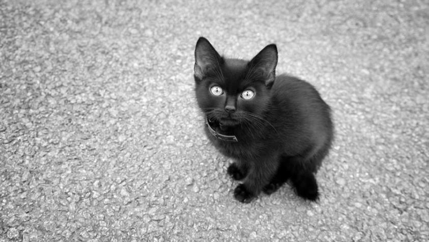 Как необычно назвать черного котенка мальчика