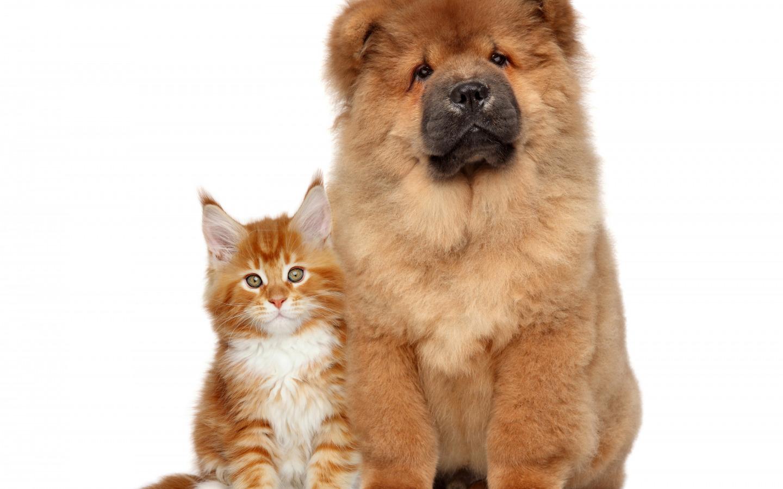 Китайские имена для собак и кошек
