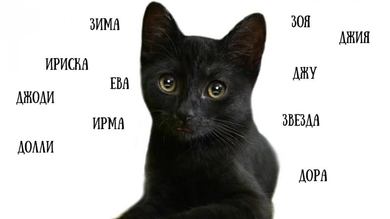 Клички для кошек девочек редкие и красивые