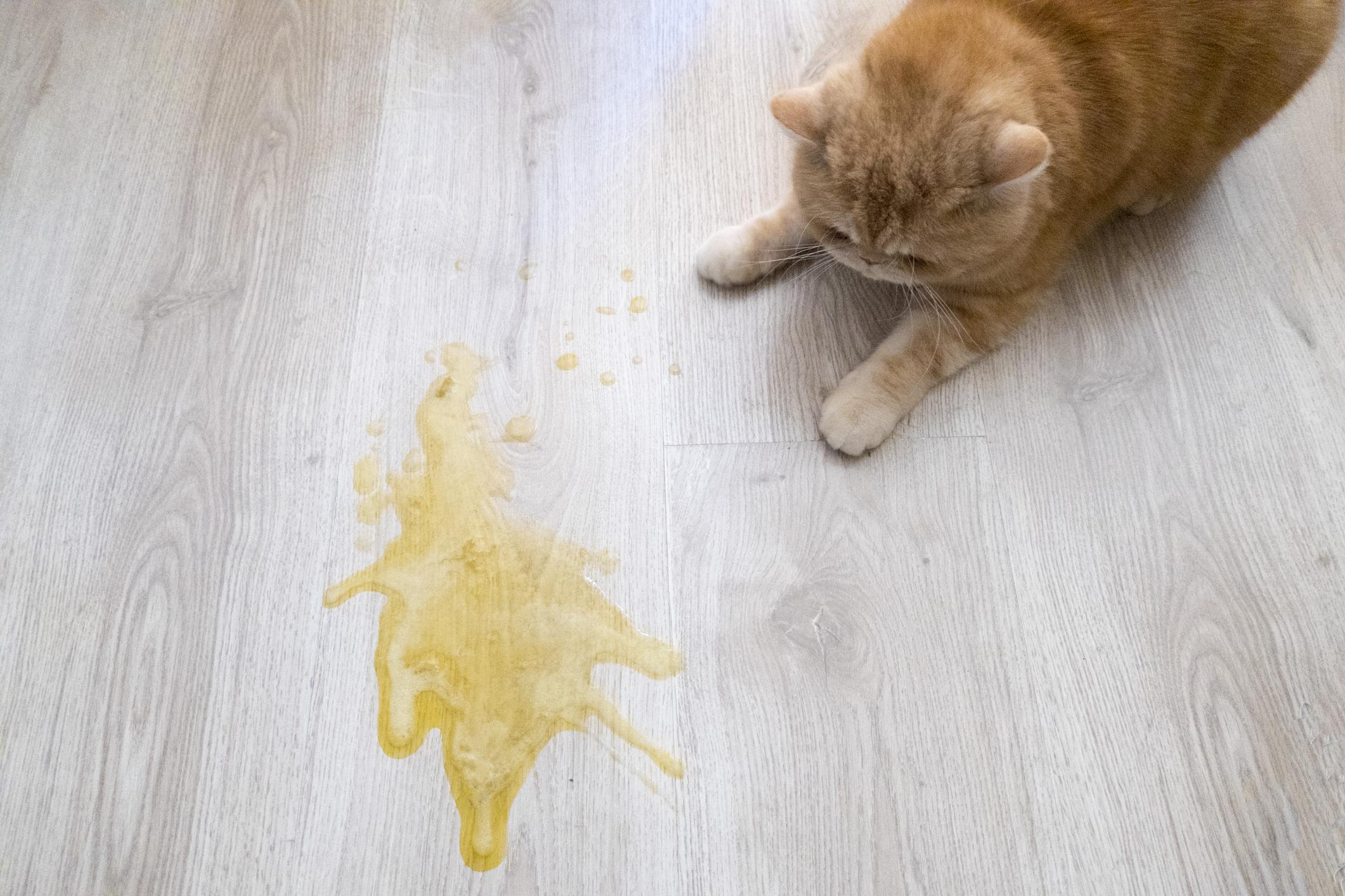 кошку рвет желтой жидкостью что делать