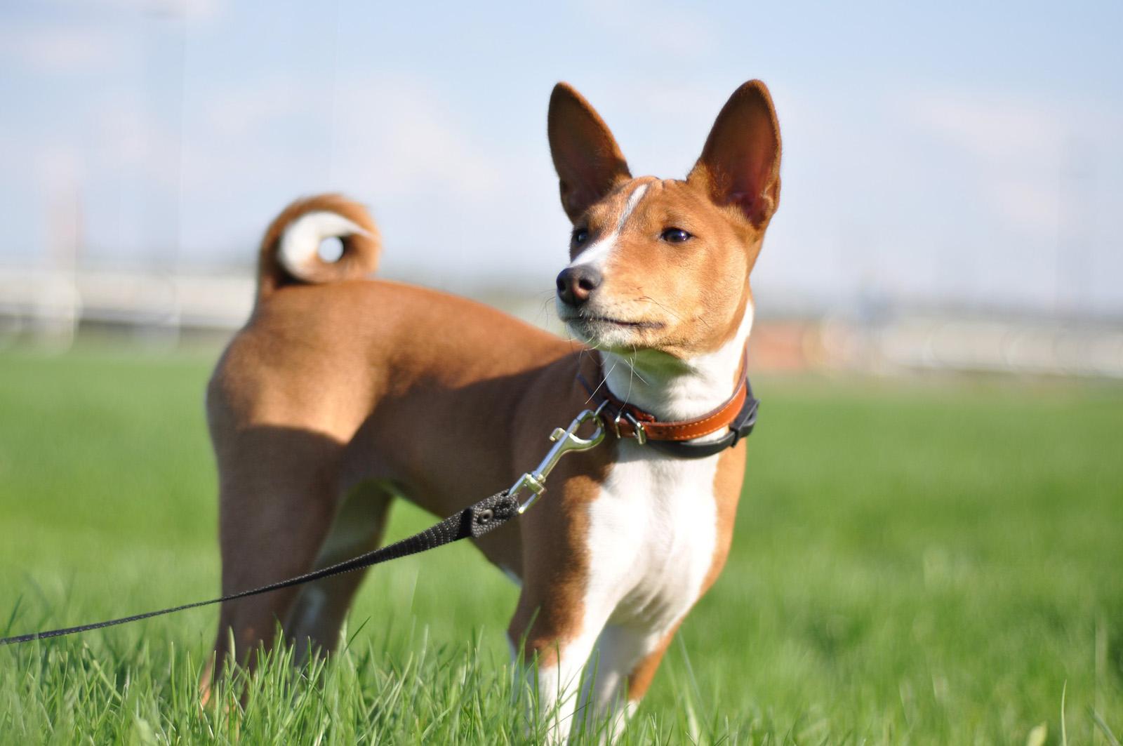 названия популярных пород собак