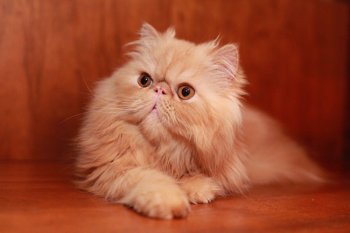 Популярные кошки