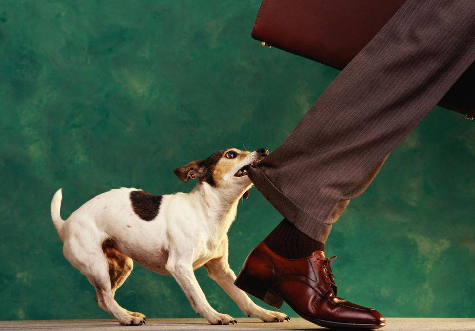 виды агрессии у собак