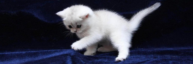 Как назвать белых кошек мальчиков и девочек