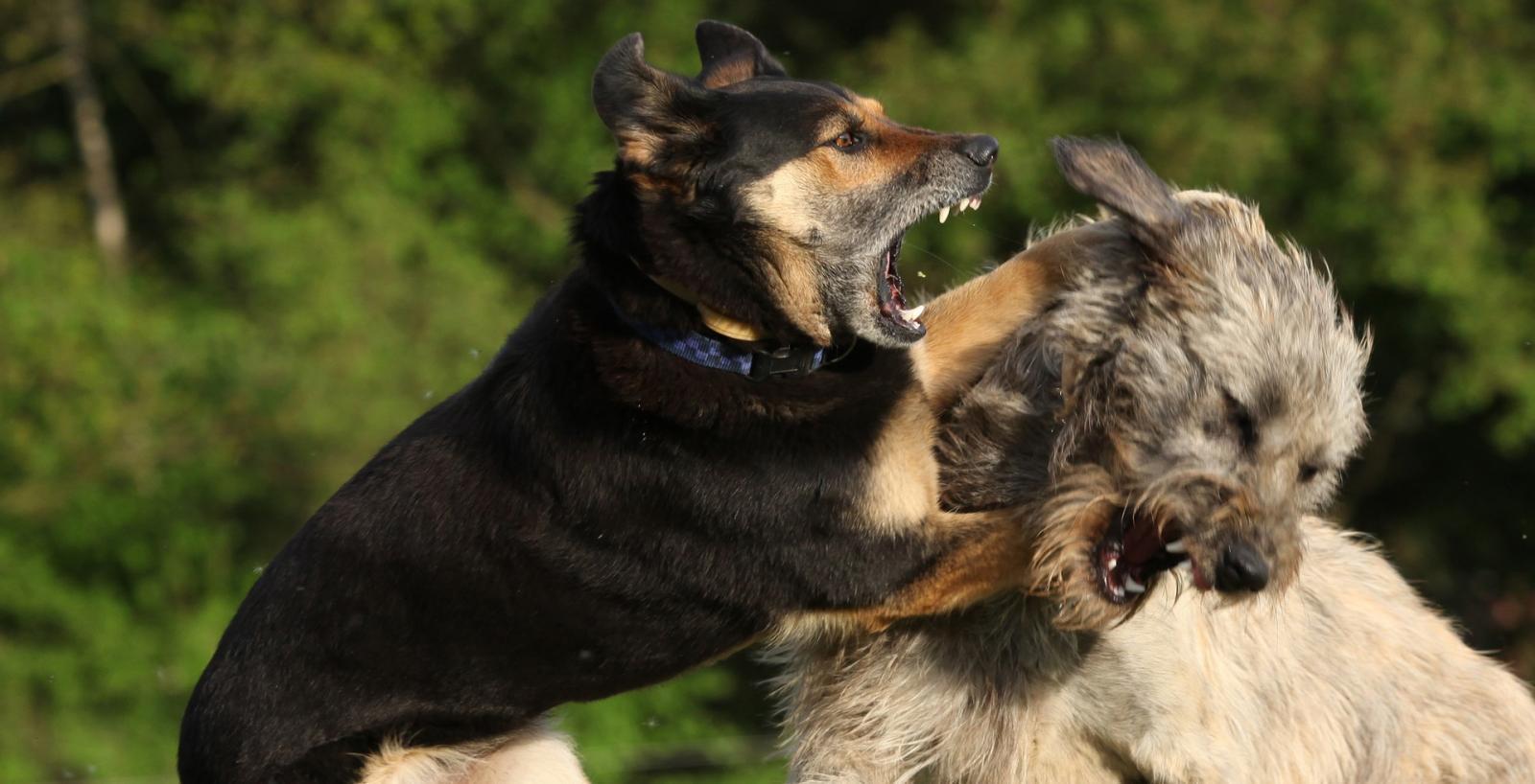 Как справиться с агрессией собаки