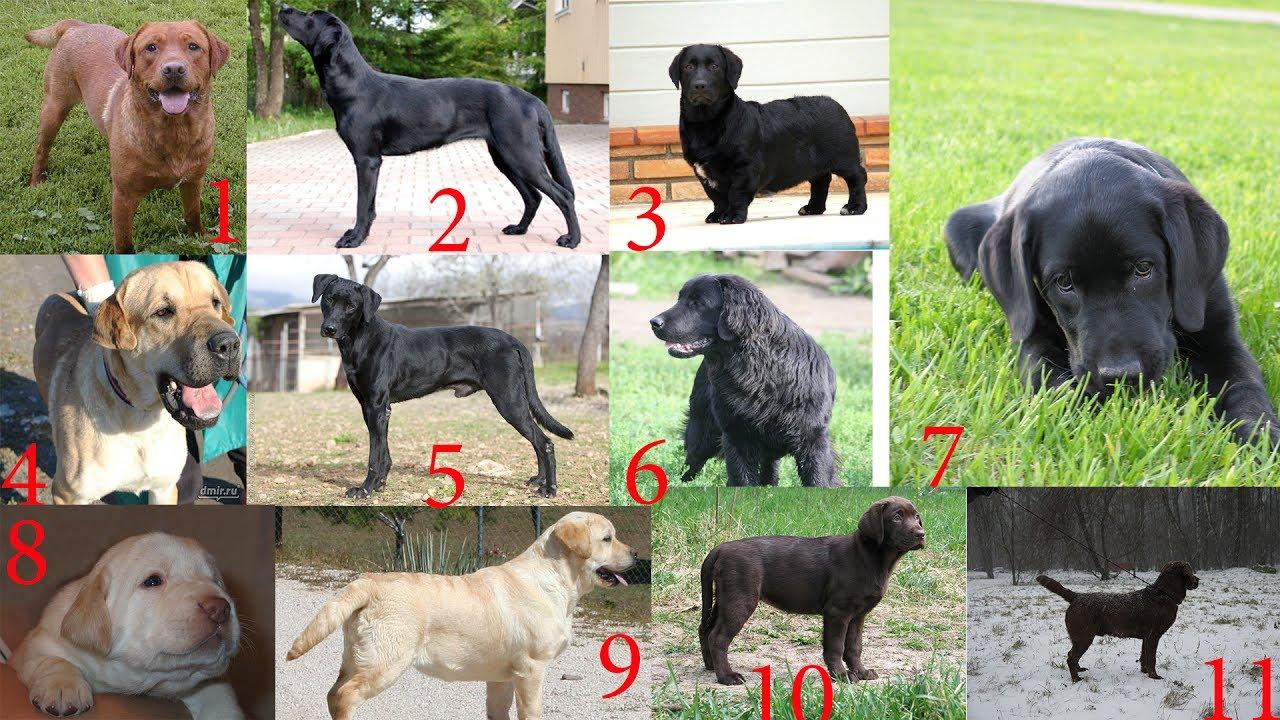 Как узнать породистая собака или нет