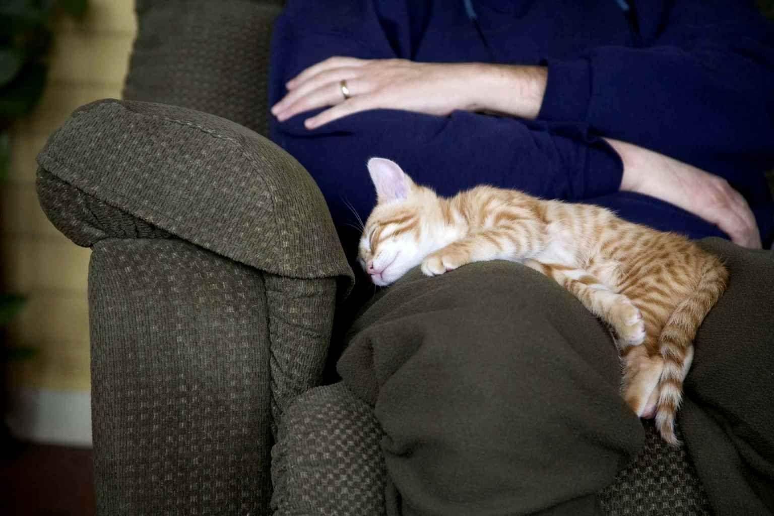 Почему кошки любят спать с хозяевами
