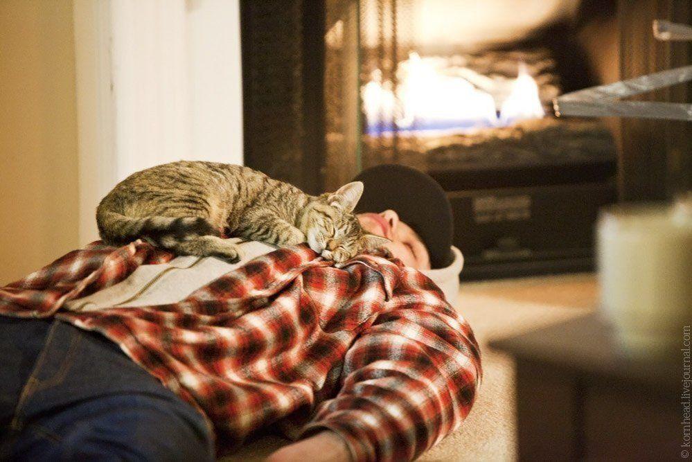 Почему коты и кошки спят на своих хозяевах