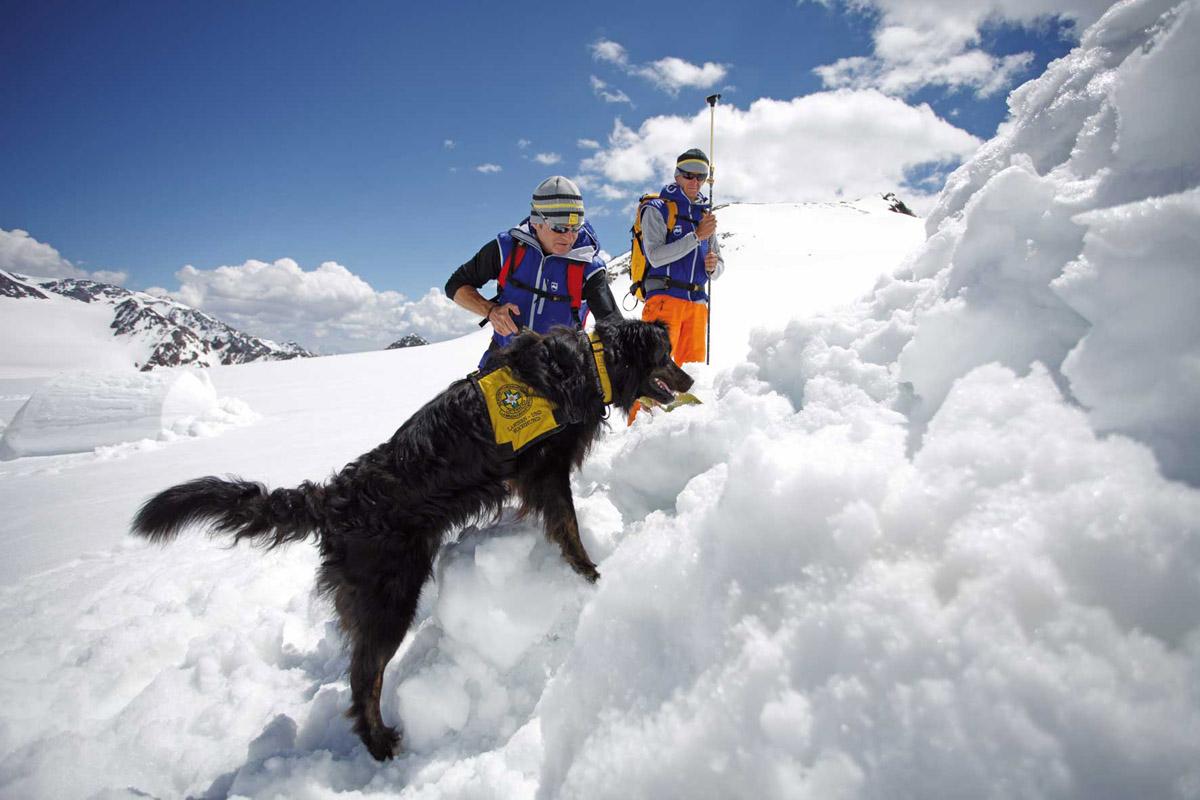 про собак спасателей