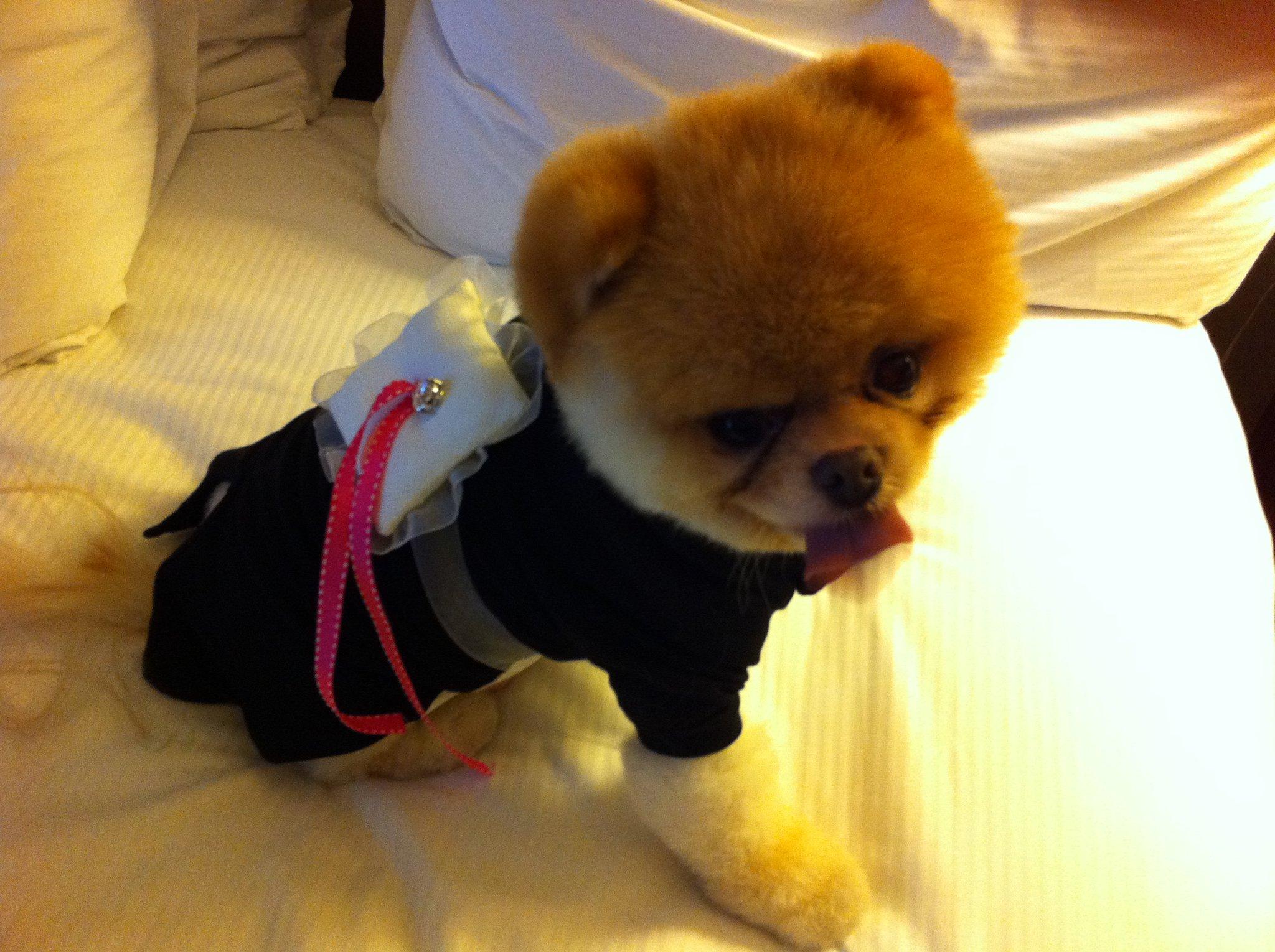 Сколько стоит собака породы шунсуке в России