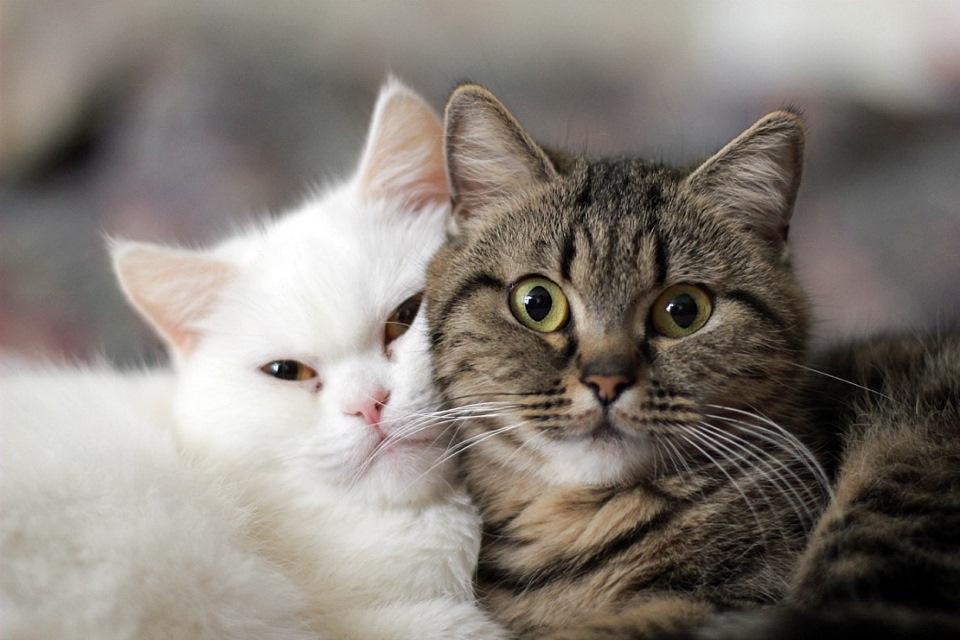 Как показать кошке что ты ее любишь