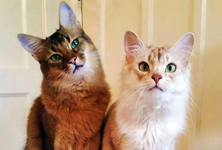 Кого выбрать кота или кошку