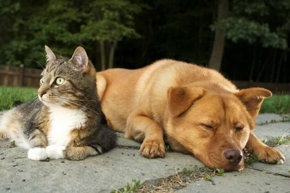 Кто умнее кошки или собаки