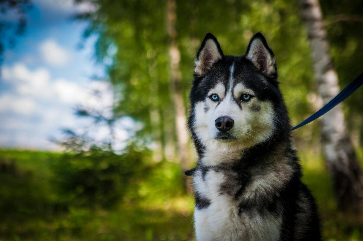 Метис собака