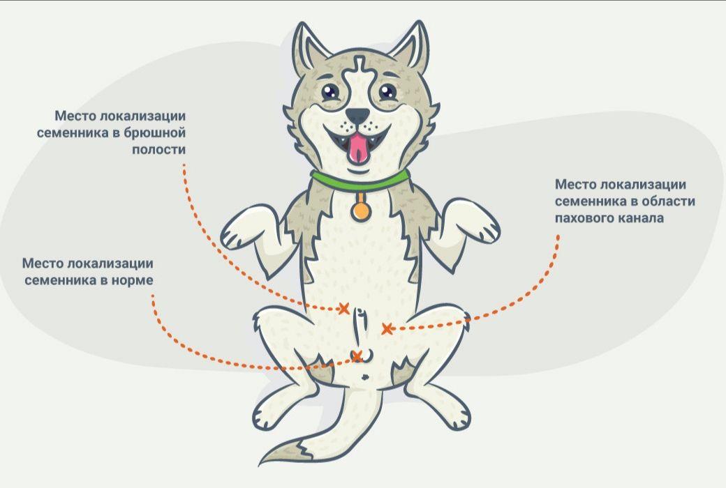 Виды и методы стерилизации кошек
