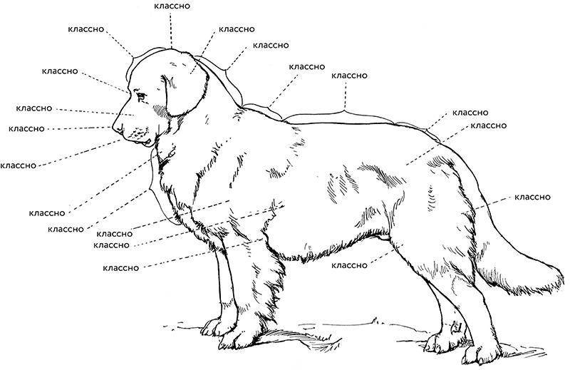 Как гладить собаку