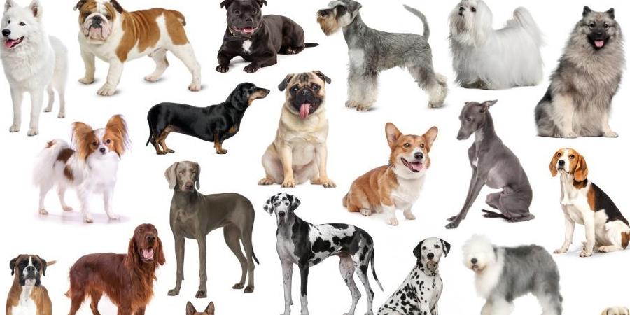 Масти собак