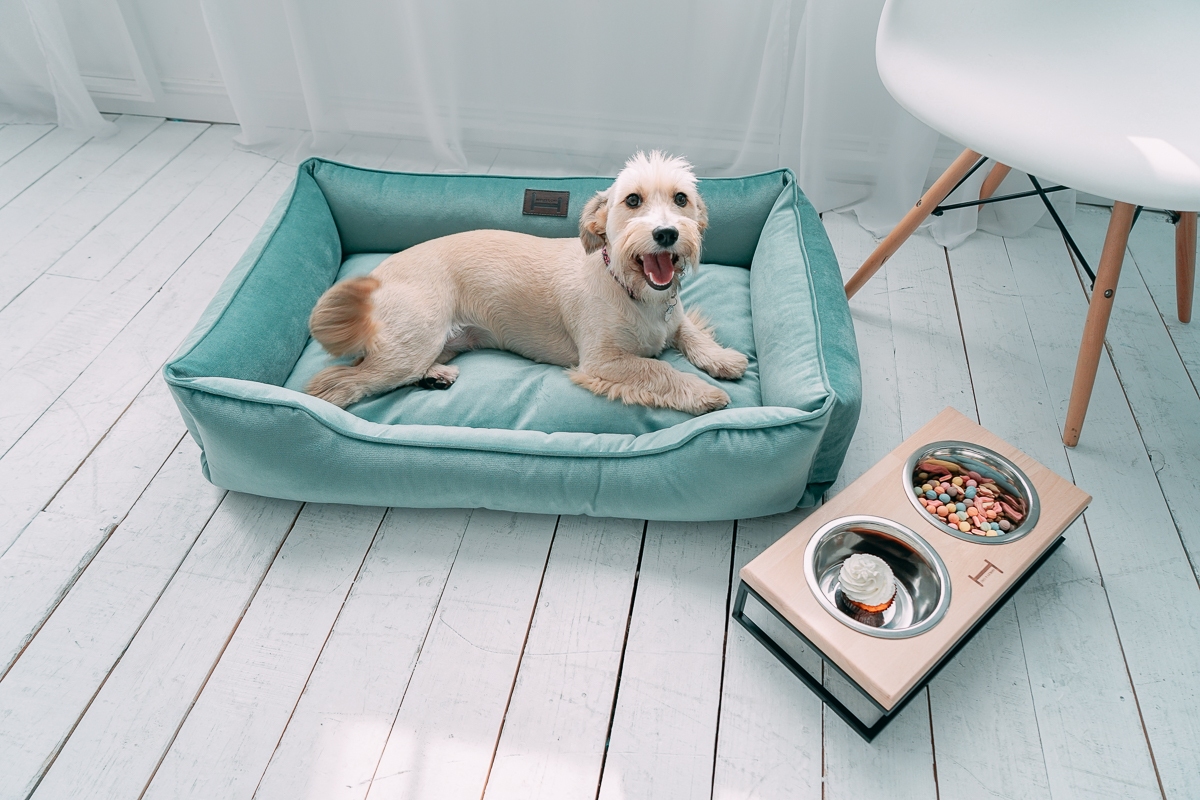 Место для собаки в квартире