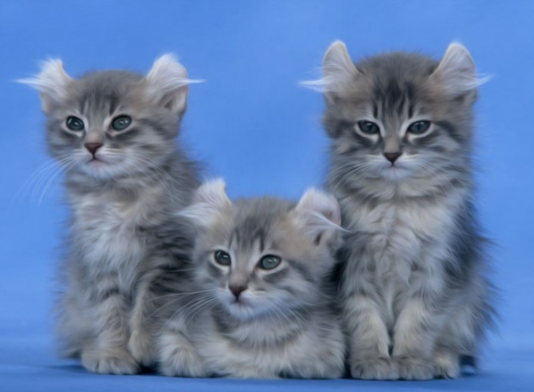 Необычные породы кошек